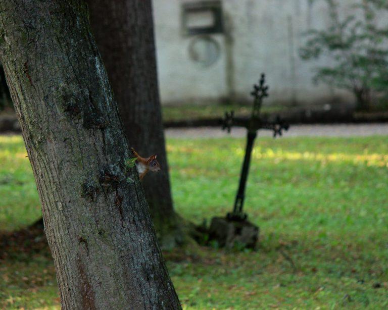 Furtivité de la vie (écureuil à proximité d'une pierre tombale)
