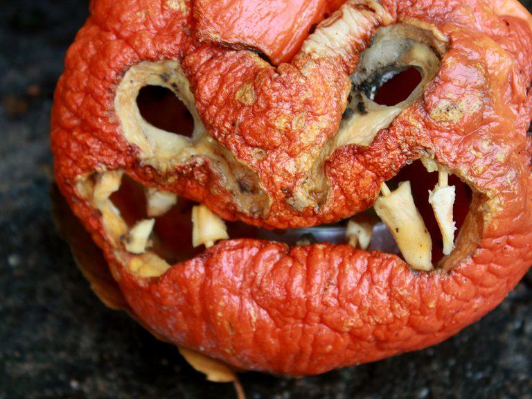 C'est après Halloween que les citrouilles font peur (citrouille sculptée qui a commencé à pourrir)